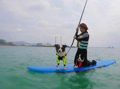 SUPでワンちゃんとご一緒にクルージング 沖縄にワンちゃんと来たけどそれなら一緒遊んじゃいましょう #沖縄 #シーナサーフ #SUP #クルージング #ワンちゃん #いぬ #いぬバカ部 #ペット #dog #okinawa #seanasurf #cruising #沖縄旅行 #ペットと一緒 #アルファアイコン #alphaicon