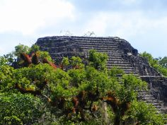 """A pyramid rises above the canopy at Tikal's """"Lost World"""". #Tikal #Maya Site, #BelizeVacationPackages #SabreWingTravel"""