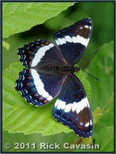 This site provides a handy guide to the butterflies of Quebec, with English and French common names, scientific names, and other useful information.