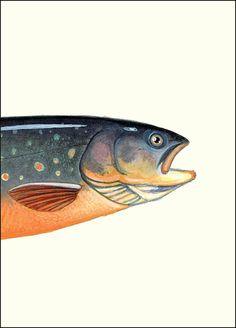 Blueback Trout Head - 5x7 inch Create Your Own Fish - by Matt Patterson, fishing art print, cabin decor