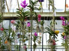 Colours in the Conservatory / by Jessica M. Winder