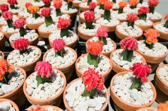 Succulents as wedding gifts, grafted cactus