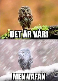 Get your laugh on to these 20 VERY Funny Spring Memes! Funny Owls, Funny Cute, The Funny, Funny Animals, Cute Animals, Wild Animals, Most Famous Memes, Animal Pictures, Funny Pictures