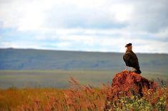 Serra da Canastra (MG) A paisagem do Parque Nacional da Serra da Canastra é feita de Campos de Altitude e Cerrado. Muitas atrações têm o acesso complicado. Algumas têm a contratação de um guia como requisito obrigatório.