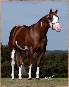 242 mejores imágenes de Caballos cuarto de milla | Quarter horses ...