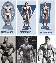 Arnolds blueprint cut day 3 chest back youtube beauty pinterest body types simplyshredded body building forum page 1 bodybuildingnutrition malvernweather Image collections