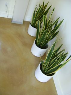 Stained Overlay, Seamless flooring, modern floors
