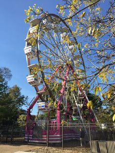 Ferris Wheel at Lincoln Park Zoo Chicago