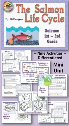 Life Cycle of the Salmon - Mini Unit with Craftivity Stem Science, Teaching Science, Science Activities, Teaching Reading, Magic School Bus Episodes, Third Grade Science, Outdoor Education, Outdoor School, Life Cycles