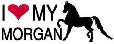 Morgan Horse Love <3