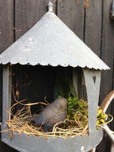 Le jardin de Mme Pedersen