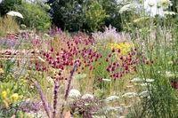 Netzwerk Blühende Landschaft | Handlungsempfehlungen | Garten