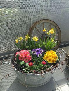 Frühlingsbepflanzung   - deko Frühling - #Deko #Frühling #Frühlingsbepflanzung Spring Plants, Spring Garden, Flower Planters, Flower Pots, Early Spring Flowers, Modern Garden Design, Garden Pictures, Decoration Table, Garden Pots