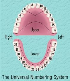 Dental chart showing tooth numbering system #dentalcare