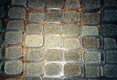 Hemp, Chanvre, Hanf Olison Hemp Seeds, How To Dry Basil, Herbs, Hemp, Herb, Medicinal Plants