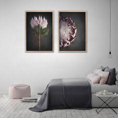 King on Gray - prints by Natascha van Niekerk Fine Art Photography Large Art Prints, Art Prints For Home, Framed Canvas Prints, Canvas Wall Art, Wall Art Prints, Fine Art Prints, Botanical Wall Art, Botanical Prints, Square Art