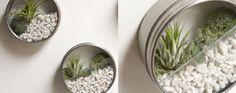 Jardines de aire: un opción sencilla para decorar con naturaleza | La Bioguía