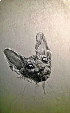 Graffiti Bridge, Sphynx, Street Art, Cats, Animals, Gatos, Animales, Sphynx Cat, Animaux