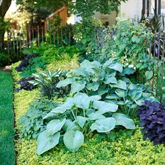 Great ground cover with the Hostas.  Golden Creeping Jenny, Purple Coleus and Black Mondo Grass are good ideas.
