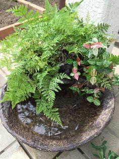 Schale f r wasserpflanzen garten wasser pinterest wasserpflanzen weinfass und dekorieren - Weinfass dekorieren ...