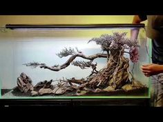 (5) Fam Aqua Design (Lũa ghép bonsai dáng cổ thụ) - YouTube Biotope Aquarium, Nano Aquarium, Aquarium Design, Reef Aquarium, Aquarium Fish Tank, Planted Aquarium, Fish Aquariums, Snake Terrarium, Terrarium Plants
