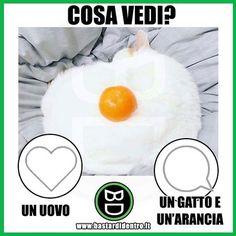 Aguzza la vista è dacci la tua risposta! Seguici su youtube/bastardidentro #bastardidentro #gatto #arancia www.bastardidentro.it