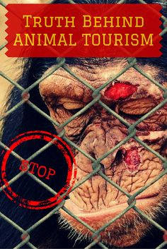 Entertainment or Animal Cruelty- The Truth behind Animal Tourism