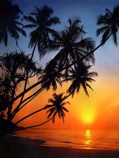 Palm trees & sunsets!