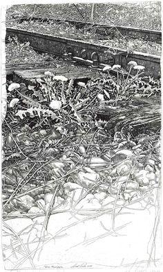 Flora ferroviaria - Livio CESCHIN