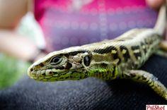 Close up   Reptile - PxlShot.ro