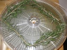 Dried Herbs in the Dehydrator