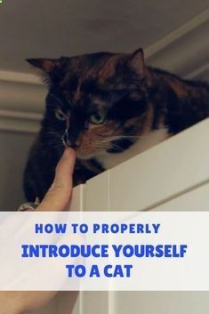 Cat Care Kittens Here's the lovely Jackson Galaxy showing us ways to safely and respectively approach a new cat. Cat Care Tips, Pet Care, Dog Cuddles, Cat Behavior, Cat People, Cat Facts, Cat Grooming, Beautiful Cats, Cats And Kittens