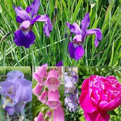 #garden is in full #bloom .. Loving the #summer colors.#flowers #backyard #rural. #rurallife #workfromhome