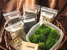 DIY Moss Terrarium Kit
