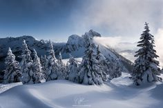 """Winter Wonder World - When I dream about winter this scenery I explored in the Bavarian Alps comes close to my imagination. Smooth and tender, but other-worldly and majestic with the snow-covered mountain range in the background. Go out and explore Nature!  Prints and licensing available.  <a href=""""https://www.facebook.com/StefanHefelePhotography"""">Facebook Fan Site</a>  <a href=""""http://www.stefan-hefele.de/en/news.html"""">www.stefan-hefele.de</a>"""