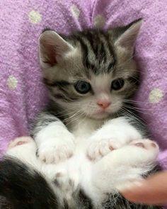 1000 Best Kittens Cats 2 Images Kittens Cats Cats Kittens