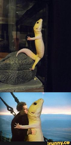 lizard, wins, an, oscar, titanic. Leo