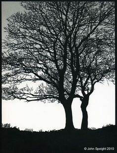 trees papercut by John Speights