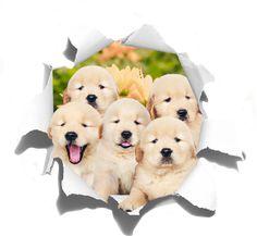 Muurstickers dieren schattige puppy's Puppy, Snoopy, Teddy Bear, Cute, Animals, Animales, Animaux, Kawaii, Teddy Bears