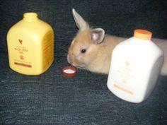 Ook voor onze dieren werkt het uitstekend Aloë Vera Aloë is NIET getest op dieren! svbforever@gmail.com