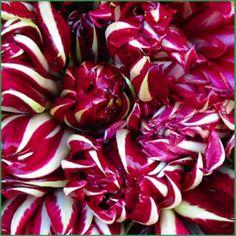 Il radicchio rosso è un ortaggio di stagione molto prezioso per affrontare il freddo, squisito sia crudo che cotto. La versatilità del radicchio è accompagnata da una buona quantità di nutrienti. E' una miniera di antiossidanti, ma è ricco anche di sali minerali e di aminoacidi.  #farmaciaallegrazie #farmacia #bassano #proprietà #radicchio #inverso #salute #benessere #mangiare #sano