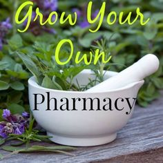 Start your own personal pharmacy...in your backyard.