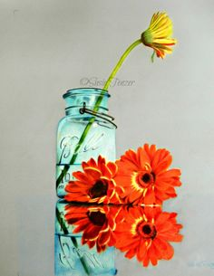 Colored pencil drawing orange flowers blue mason jar.  prints available