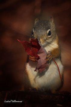My leaf!