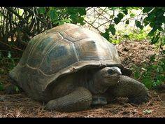 Turtles and Tortoises - Full Length Documentaries