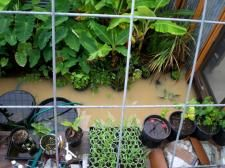 Flooding in the earth sheltered greenhouse. Doesn't last long.