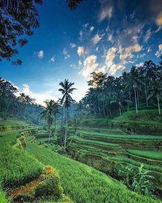 Woow!!! Ini 10 Pemandangan Menakjubkan Terasering di Bali Yang Wajib Dikunjungi
