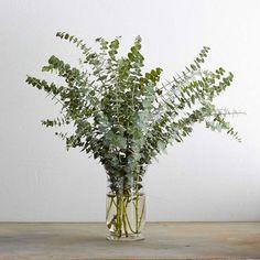Spiral Eucalyptus Branches