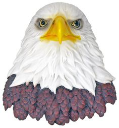"""Hanging Eagle Head in uncletomstoystore's Garage Sale in Portland , OR for $25. Features: Decorative statue is made from highly detailed poly resin  Paint is baked into surface to prevent chipping  Includes necessary hardware to hang on the wall  Overall height: 8.5"""" gets to your home 7 to 14 days  if you have any questions please email me"""