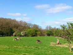 Forest View, Log Cabins, Countryside, Holiday, Animals, Vacations, Wood Cabins, Animaux, Animal